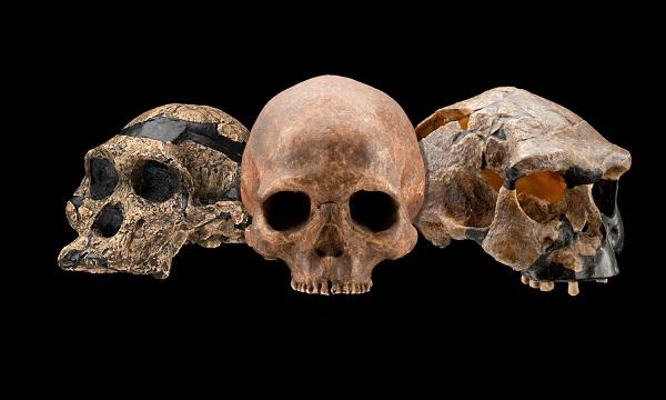 skullshuman-origins-programnmnh-smithsonianpd
